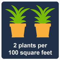 Growing Plants Leads to Cleaner Air